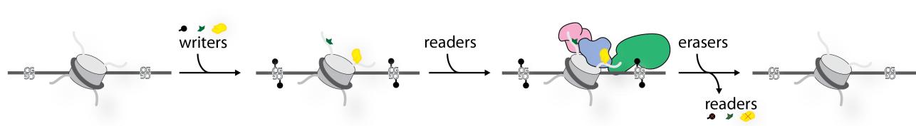 Marcus D Wilson Edinburgh schematic